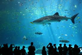 Senior Maritime Aquarium Trip